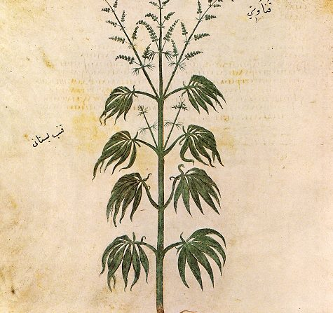 the history of the use of marijuana in the new world Marijuana equals freedom in the new world marijuana was already in the new world when the first european colonist arrived, thought to have been introduced from china by explorers, migrating birds from across the bering strait, or possibly drifting shipwrecks.